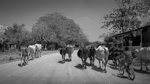 Traffic, Popoyo, Nicaragua